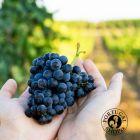 Terras de Baco 2018, Alentejo, Portalegre, červené víno, suché, 750 ml